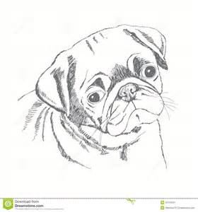 pug dog face hand drawn illustration sketch stock illustration image 47219947