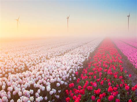 Pics Of Spring | 15 beautiful pictures of spring flowers around the world