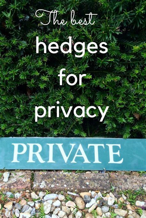 25 best ideas about evergreen best 25 evergreen hedge ideas on evergreen