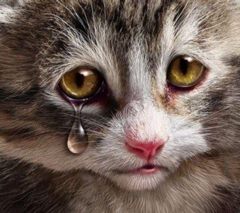 Sho Rainbow So Kucing Sho Kucing Dan Baby Cat Kittens 250ml foto kucing paling comel flauschige katzen