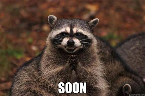 Raccoon Meme - soon evil plotting raccoon quickmeme