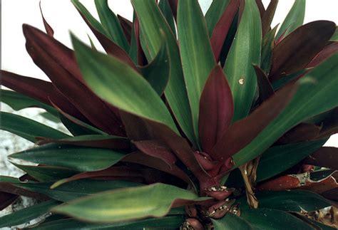 green purple plant flickr photo sharing