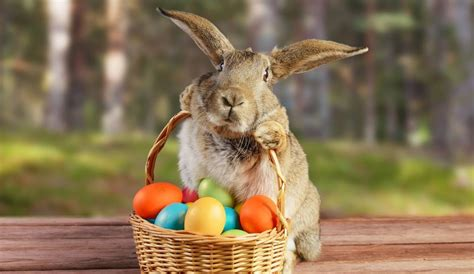 why is the rabbit associated with easter why the easter bunny should remain a story not an impulse pet