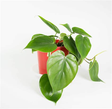 Desk Planter by Sweetheart Plant In Lunar Planter Plantandpot Nz