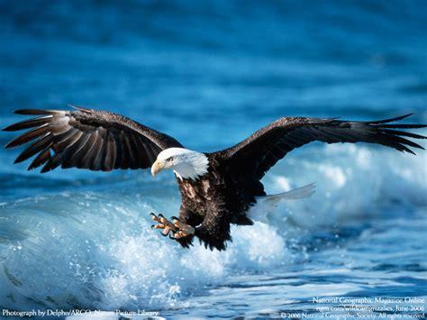 exotic animals bird pictures eagle amazing animal