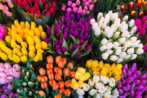 piantare tulipani in vaso come coltivare i tulipani non sprecare