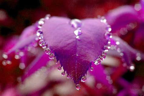 Picture Flowers Beautiful - many flowers beautiful nature photo 22639508 fanpop