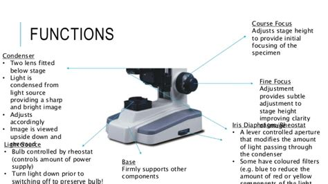 What Does The Focusing Knob On A Microscope Do by The Microscope