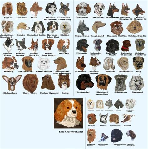 breeds with names breed chart with names