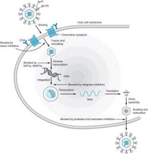 Obat Antiretroviral Arv virus materi pengayaan