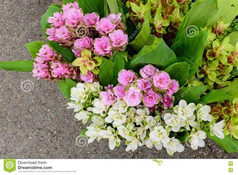 lista di fiori tipi di fiori elenco molti tipi di fiori da vendere lungo