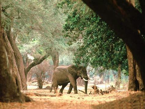 elephant wallpaper for walls elephants wallpapers animals pinterest elephant