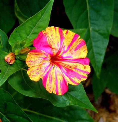 flowers bloom night blooming flower flickr photo sharing