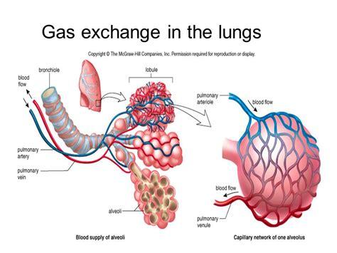 gas exchange isap 100 2014 pinterest gas exchange process bing images