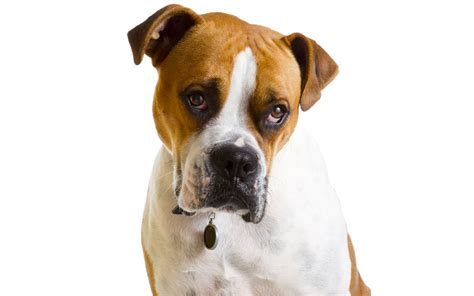 can dogs can dogs feel guilt 10 common myths about behavior