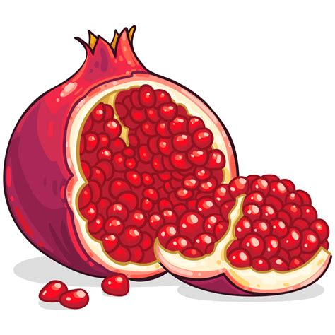 photos clipart pomegranate pictures clip 28