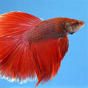 Fish S Aquarium Fish Food Nutrition Petsmart