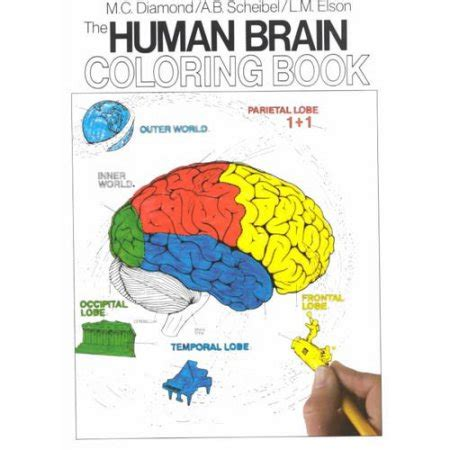 anatomy coloring book harpercollins the human brain coloring book coupons