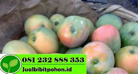Bibit Mangga Gedong Gincu Indramayu bibit mangga unggul archives jual bibit pohon 081232888353