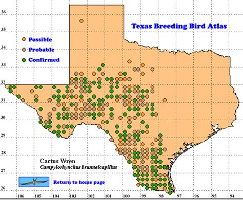 cactus texas map cactus wren the texas bird atlas