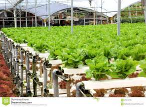Ultimate Bed Plans agriculture hydroponic vegetable farm royalty free stock