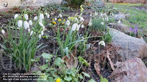 Garten Februar by Garten Im Februar Was Bl 252 Ht Im Februar Aktuelle Bilder