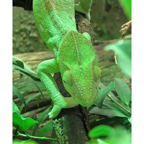 Answer Styledash Help Our Skin All by Camouflage Animals How Do Animals Camouflage If The