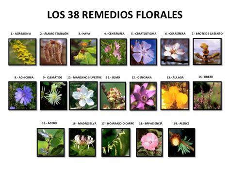 imagenes flores bach flores de bach