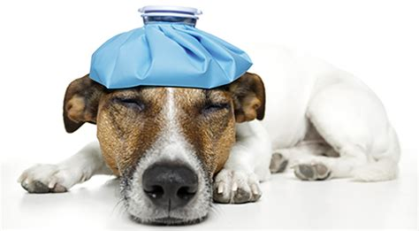 can dogs get headaches ode to the headache wellbeing magazine