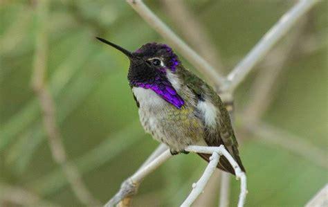 pashudhan and animal science bee hummingbird world s