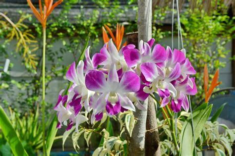 orchideen samen kaufen orchideen kaufen gesund sch 228 dlingsfrei sind oberste