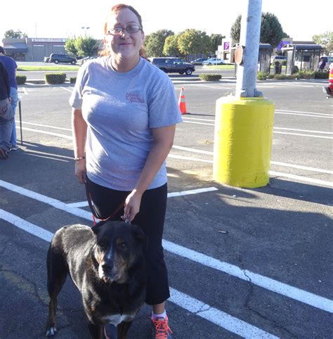 rottweiler labrador mix temperament low cost and cat in northern california rottweiler labrador mix gets