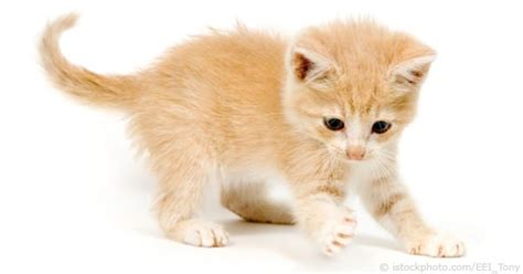 pet cat pet cat behaviour