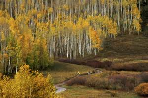 of colorado colors colorado fall color guide best hikes drives and events