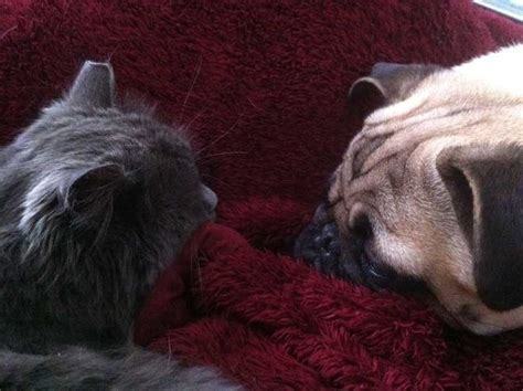 ellie the pug 137 shelter me inc barn cats where they came from how they re doing shelter me