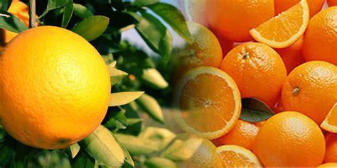 m fruit srl products oranges morresi fruit