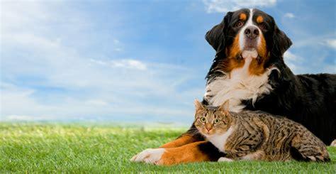 best puppy insurance best pet insurance of 2016 credit sesame