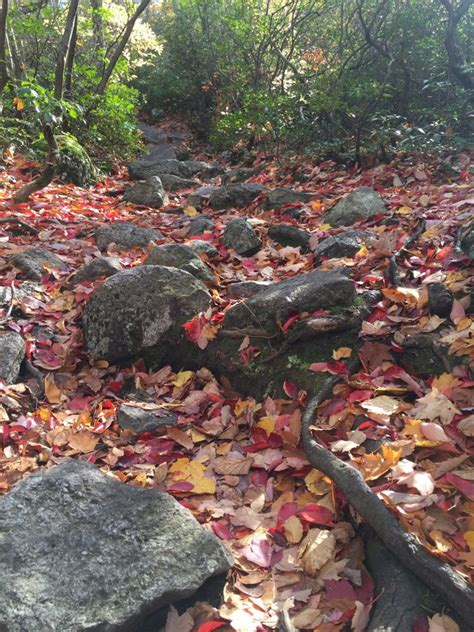Why Do Trees Shed Their Leaves In Autumn by Autumn In New Jersey Why Do Trees Shed Their Leaves