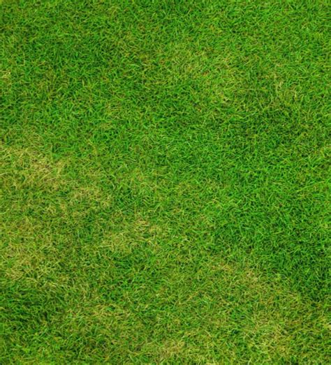 grass pattern for photoshop grass textures 30 free jpg png psd ai vector eps