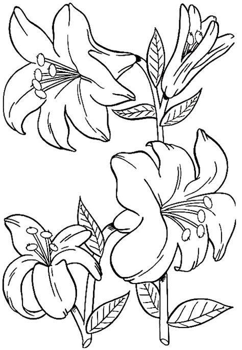 imagenes de flores grandes para colorear dibujos de flores grandes para colorear imagui