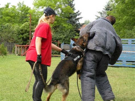 personal protection dogs mrazovac k9