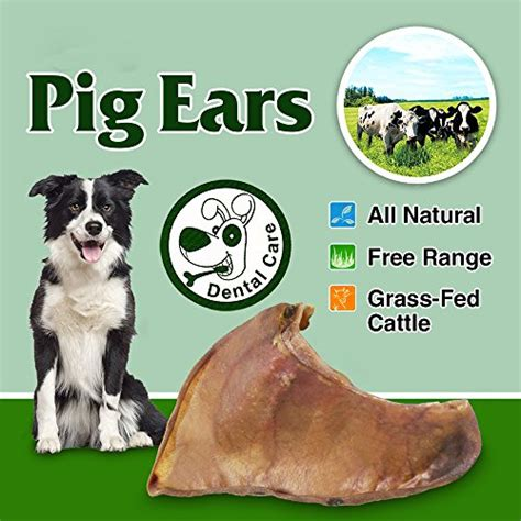 are pigs ears ok for dogs are pig ears bad for dogs can puppies them how to stay safe