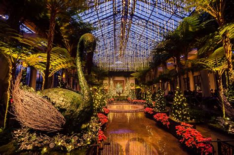 christmas lights at longwood gardens totus tuus family