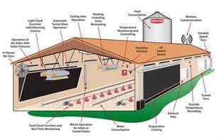 feasibility study on poultry farming for beginners