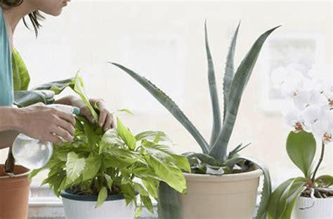 plantas de interior altas plantas altas de interior affordable plantas de interior