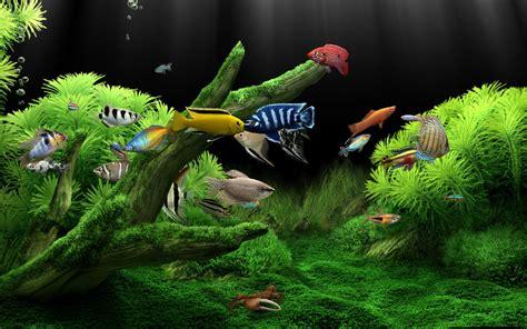 Aquarium Tv 21 Air Tawar pon un acuario como protector de pantalla identi