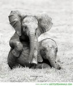 Baby elephants just cute animals
