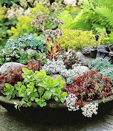 winterharte pflanzen für den garten winterharte sedum mischung top qualit 228 t kaufen baldur
