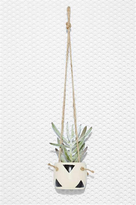 small hanging plants small spells sweet succulents pinterest