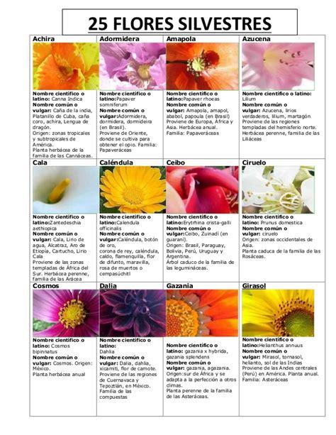 imagenes flores silvestres sus nombres tarjeta de guia mayor especialidad flores